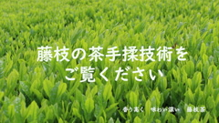 藤枝市手揉保存会が手揉技術を披露!