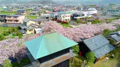 【史跡紹介】桜に映える史跡田中城下屋敷